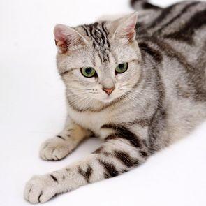 Väčšina Veľká mačička na svete